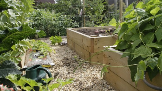 Timber Raised Beds
