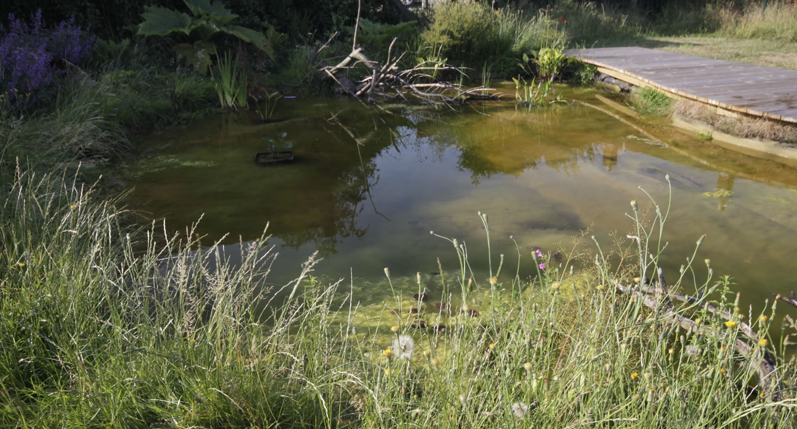 Ponds And Irrigation Hortiservices