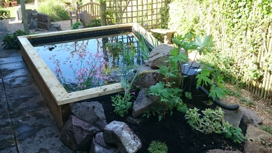 Raised ponds are a great way to enjoy water up close